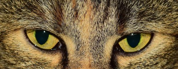 eyes-1191742_1920